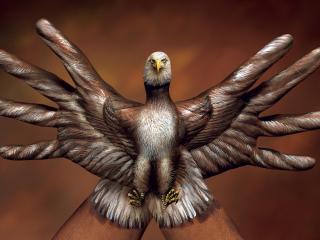 обои Ручной орел фото