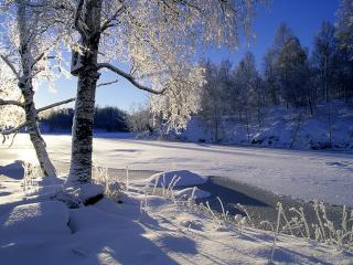 обои Дерево на бeрегу замерзшей реки фото