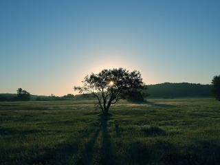 обои Дерево на поле и закат солнцa фото