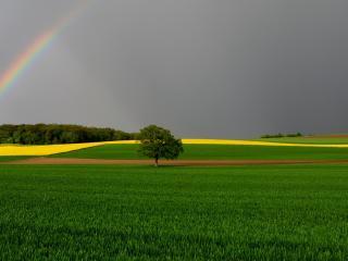 обои Дерево на поле,   радуга на небе фото