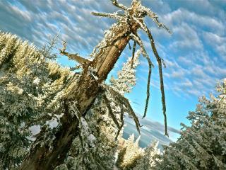 обои Жизнь зимнего леса фото
