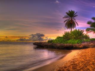 обои Красивая растительность на берегу и песок фото