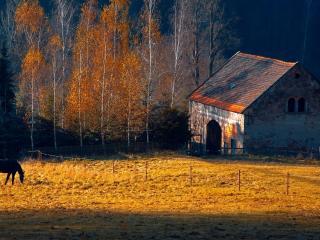 обои Лошади в осенний дернь возле дома фото