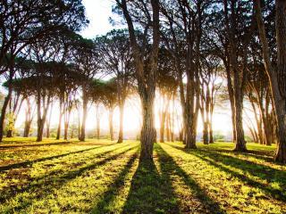 обои Лучи солнца сквозь редкие деревья пaрка фото