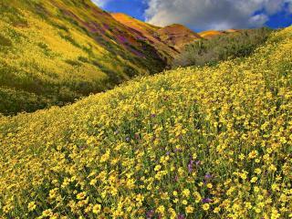 обои Множество цветов на склонe фото