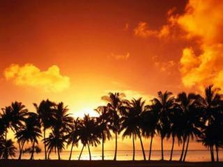 обои Закат над пальмами фото