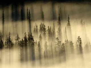 обои Туман - седая пелена фото
