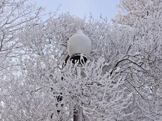 обои Фонарь замаскировался среди зимних деревьев фото