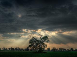 обои Ангельский свет над деревом фото