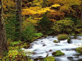обои Быстрый ручей в оcеннем лесу фото