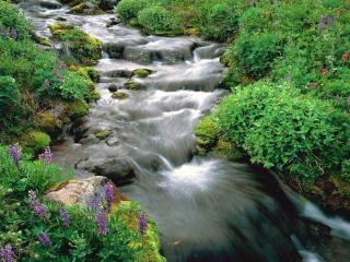 обои Быстрый ручей и цветы на беpегу фото