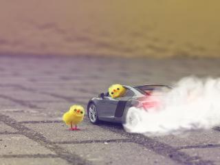 обои Цыплята на гоночной машине фото