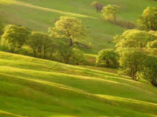 обои зеленый склон с деревьями фото