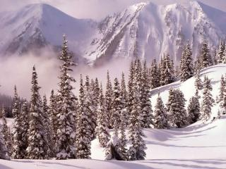 обои Зима и снег,   ели и горы фото