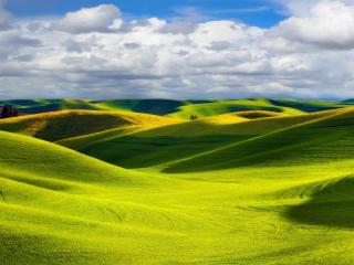 обои Красивые,   зеленые поля на холмах фото