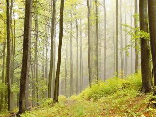 обои Красивый и светлый лес фото