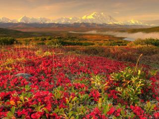 обои Красные растения у реки на равнине фото