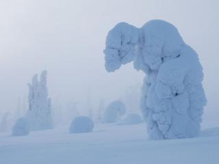 обои Причуды зимы фото