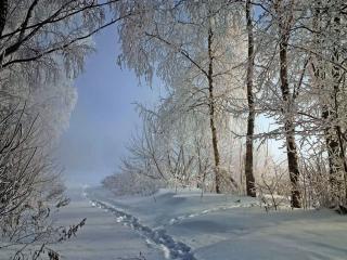 обои Тропинка в зимнем лесу фото