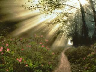обои Лучи,   цветы,   дорога,   лес фото