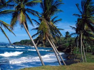 обои Пальмы и море фото