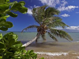 обои Кокосовая пальма над водой фото