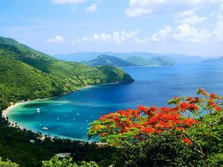 обои Кустарник с красным цветением на горе у моря фото