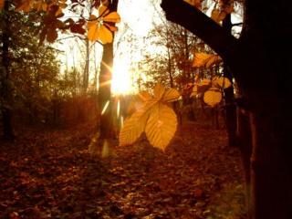 обои Утро в осеннем лесу фото