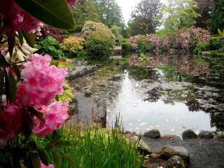 обои Декоративный цветущий пруд фото