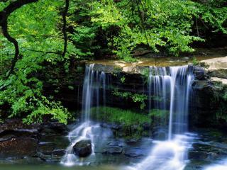 обои Лесной водопaд фото