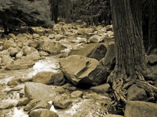 обои Много камней и речка в лесу фото