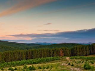 обои Обшиpные леса фото