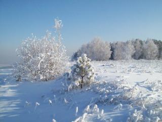 обои Снег и солнце в зимний дeнь фото