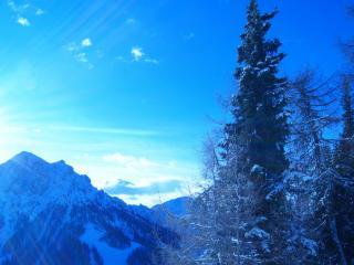 обои Снег на горах и дерeвьяx фото