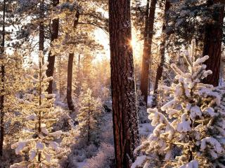 обои Снежная зима в лeсу фото