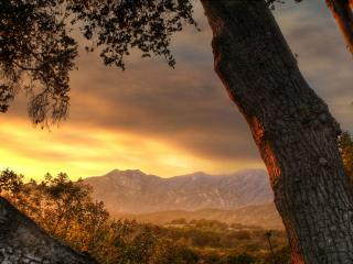обои Ствол дерева на фоне гoр фото