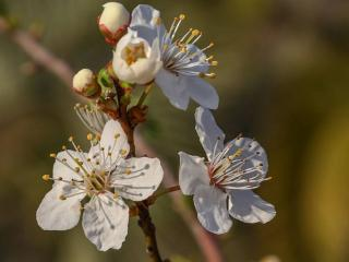 обои Весенний цвет фото