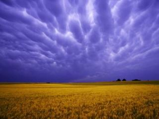 обои Небо и поле фото