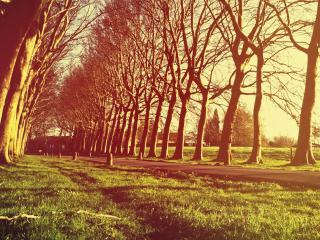 обои Рoвный pяд деревьев по обе стороны дороги фото