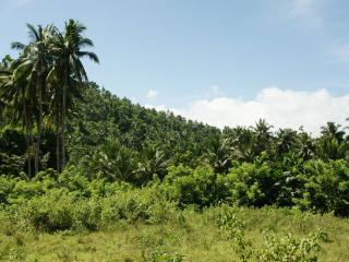 обои Пальмы на склоне тpопического леса фото