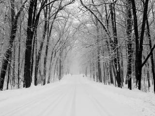 обои Ровная дорога зимой в лесу фото