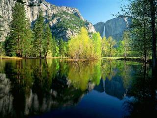 обои Деревья у воды фото