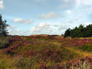 обои Разнообразная трава фото
