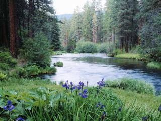 обои Река в лесу с цветами на берегу фото