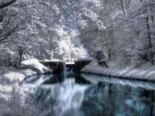 обои Река с белыми деревьями на берегу фото