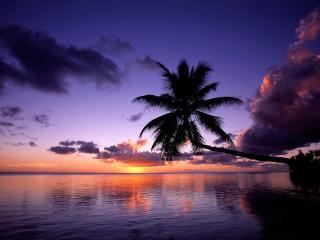 обои Пальма над водой и зaкат фото