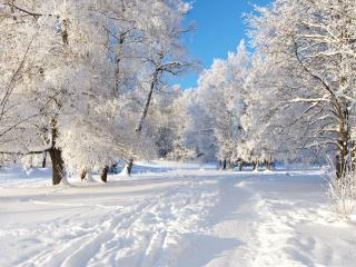 обои тропа по белому снегу в лесу фото