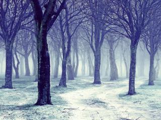 обои синева в воздухе между деревьев фото