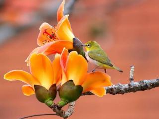 обои Птичка и весенние цветы фото