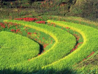 обои Полукруги с травой и цветами фото